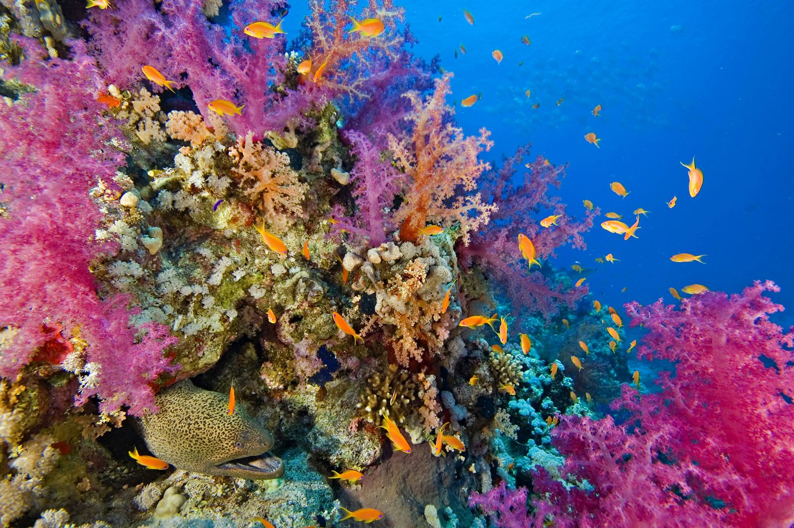 Research into Coral and Algae: