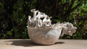 mycelium-products-by-officina-corpuscoli_dezeen_01_644