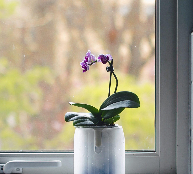 Kakukei, An Orchid's Pot